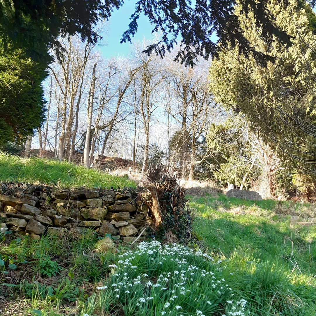 photo of snowdrops in the churchyard at Slad