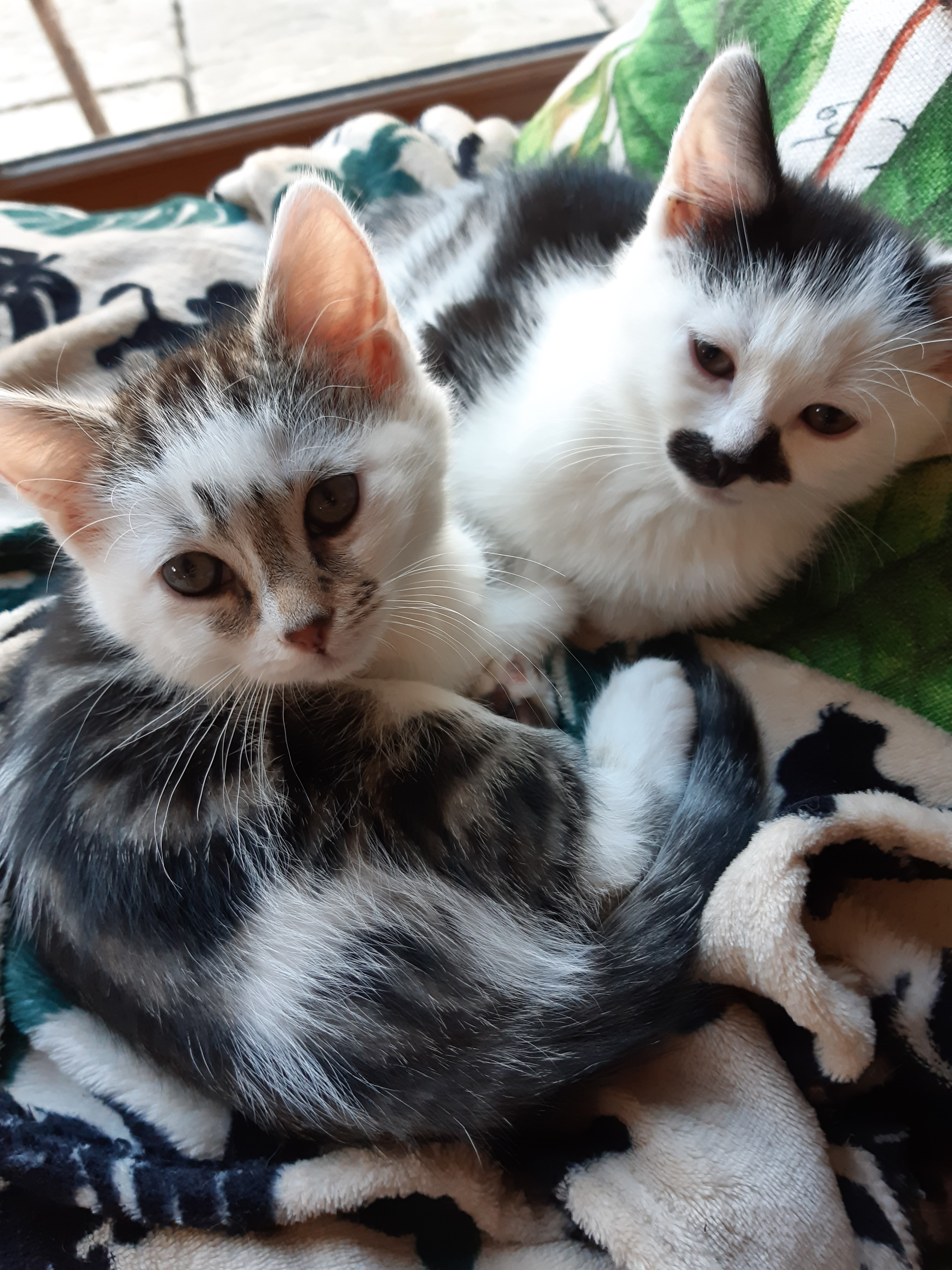 photo of two kittens on fleecy blanket