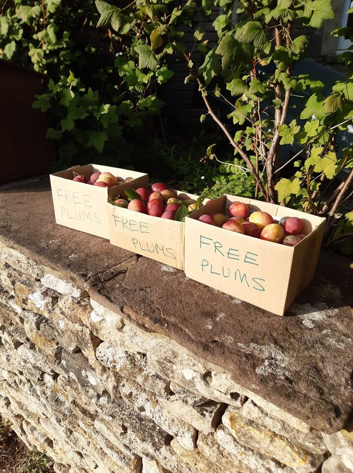 boxes of free plums on our front wall
